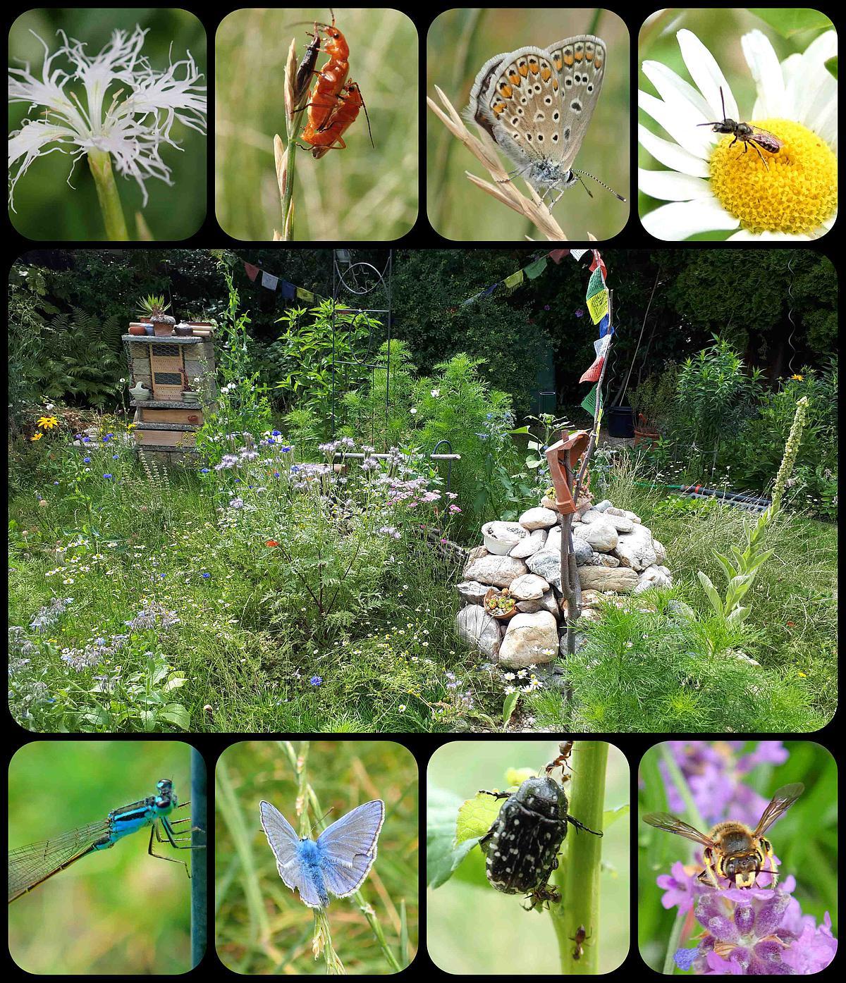 Nationalpark Garten Fotowettbewerb Gewinnerbild Platz 1