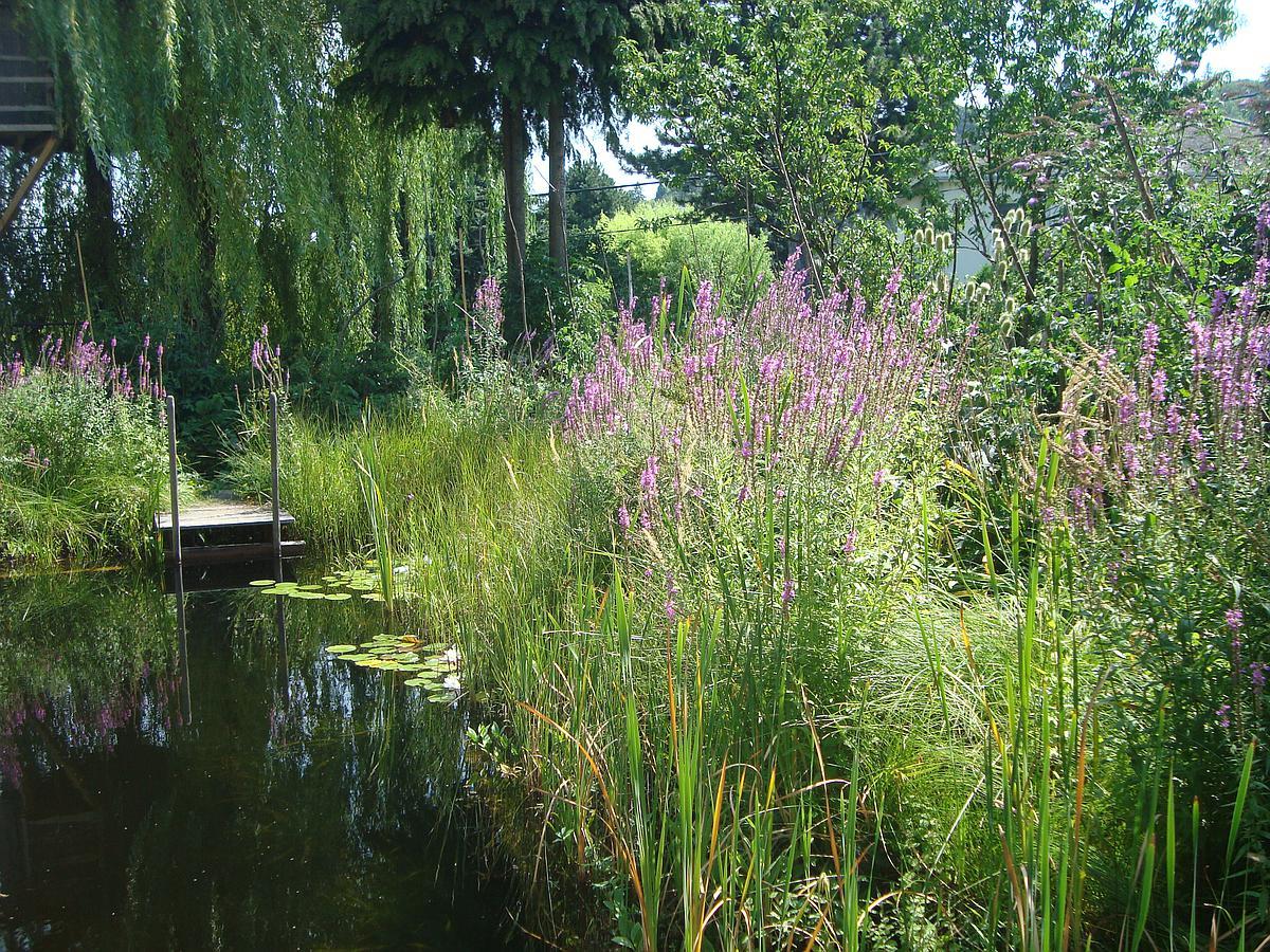 Nationalpark Garten Fotowettbewerb Gewinnerfoto Platz 2