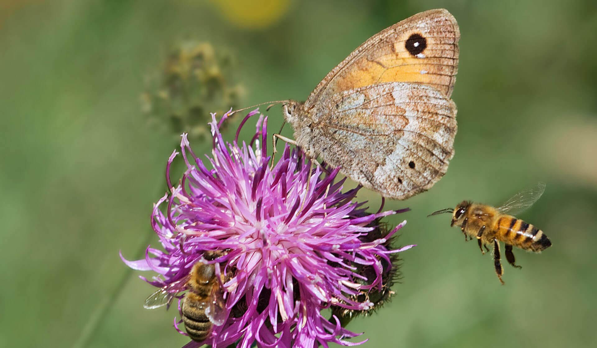 Bienen und Schmetterling auf Pflanze