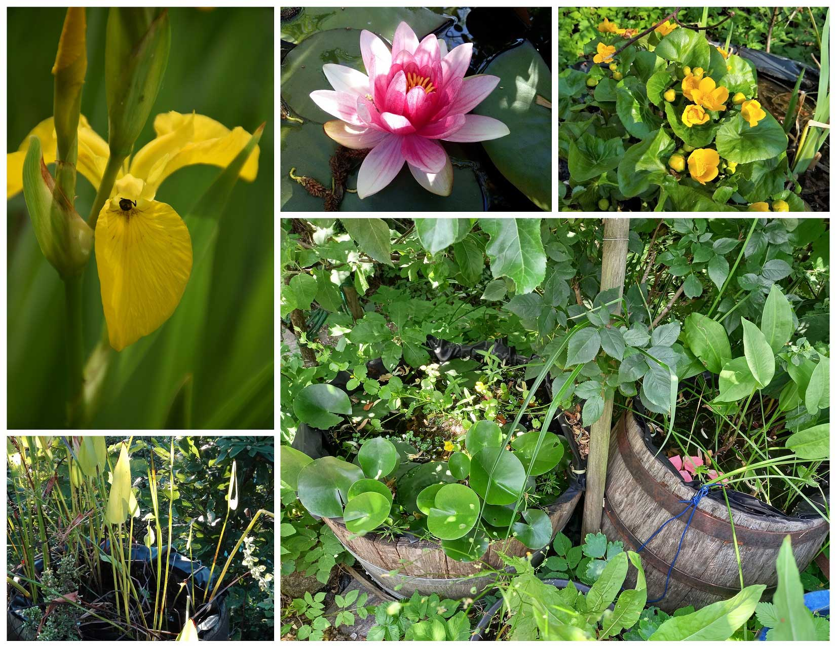 Garten von Simone H.