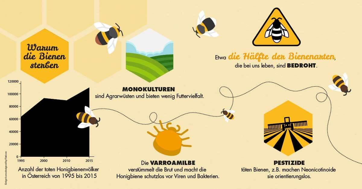 Bienen Infografik: Warum die Bienen sterben