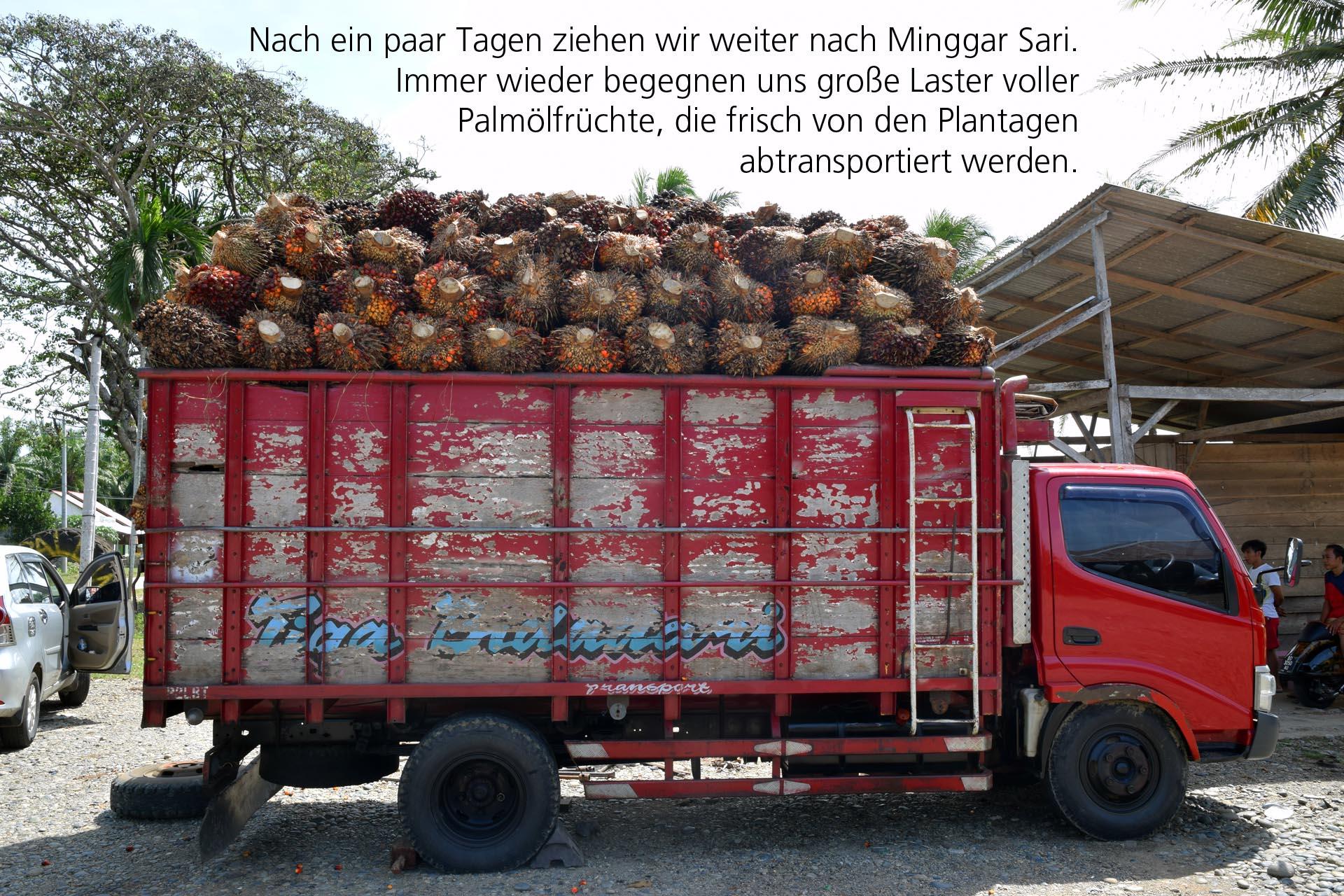 Palmölfrüchte auf Laster