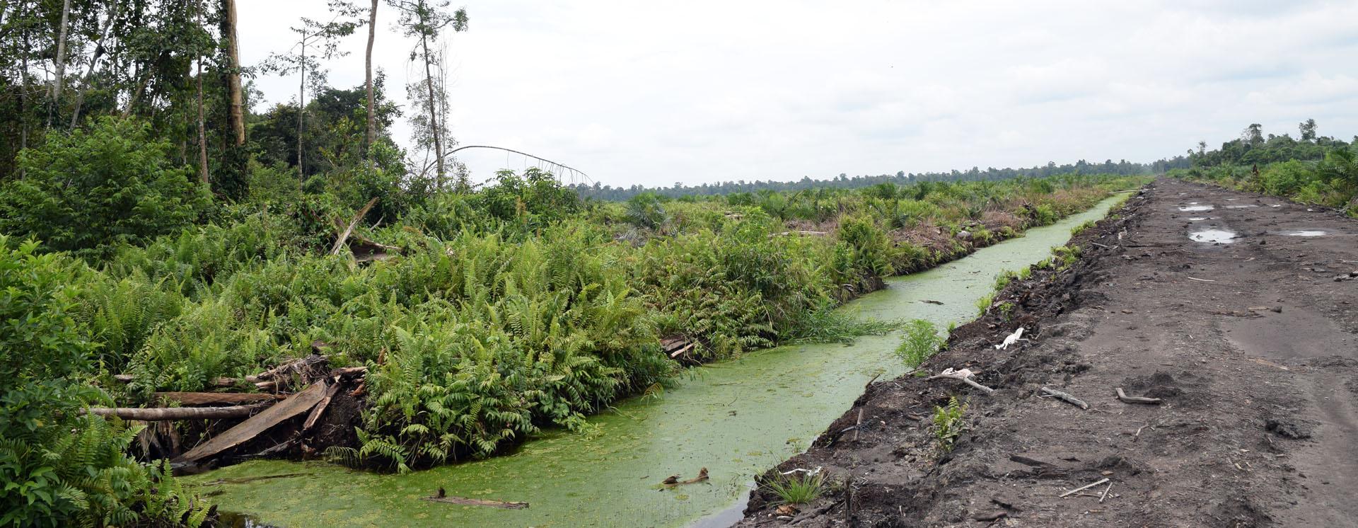 Veralgter Fluss in Pungkat