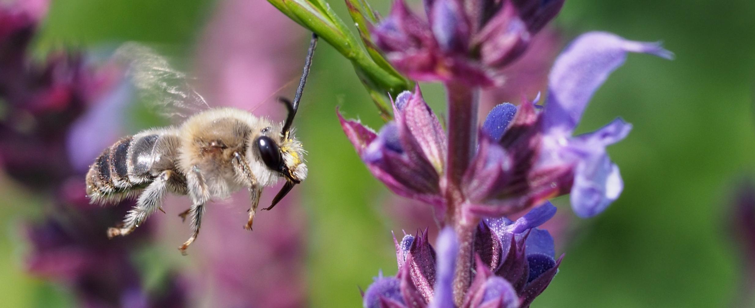 Bienen (c) Dominik Linhart