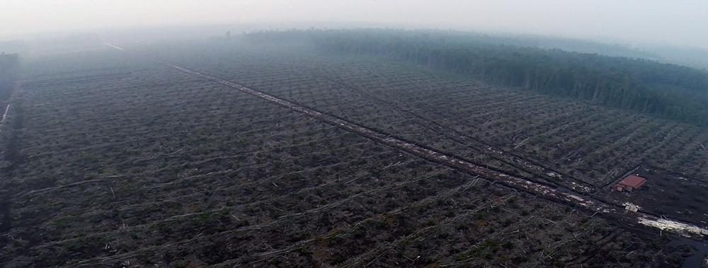 Gerodetes Land für Palmölanbau in Indonesien
