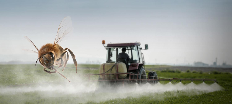 Biene flieht vor Pestizidnebel
