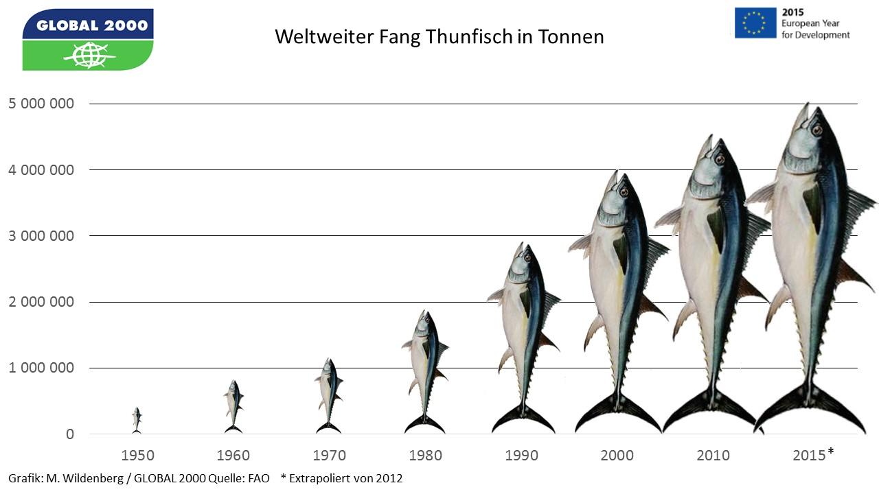 Entwicklung des Thunfischfangs weltweit