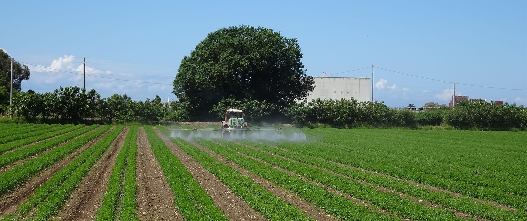 Pestizide werden auf einem Feld versprüht