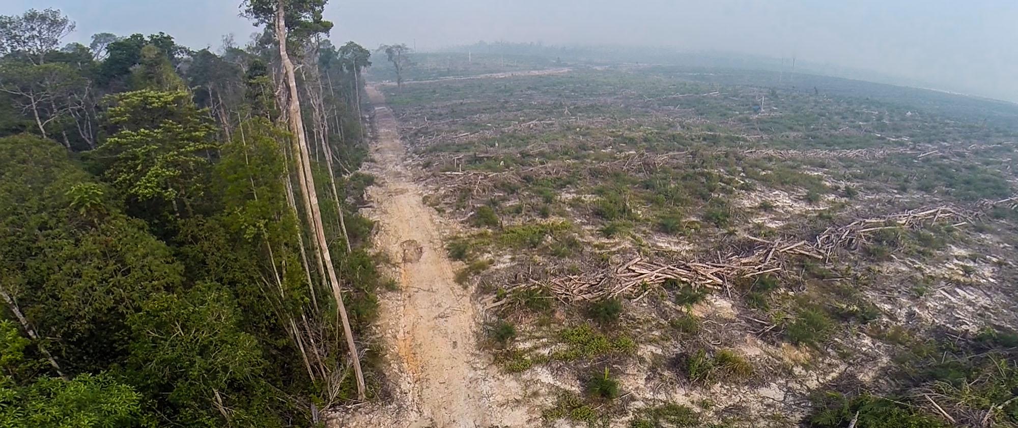 Der Regenwald in Indonesien wird gerodet - wegen unseres Hungers nach natürlichen Ressourcen