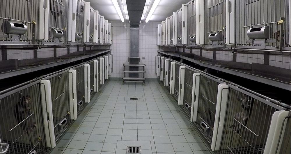 Käfige mit Versuchstieren im LPT Hamburg (c) SOKO Tierschutz / Cruelty Free International