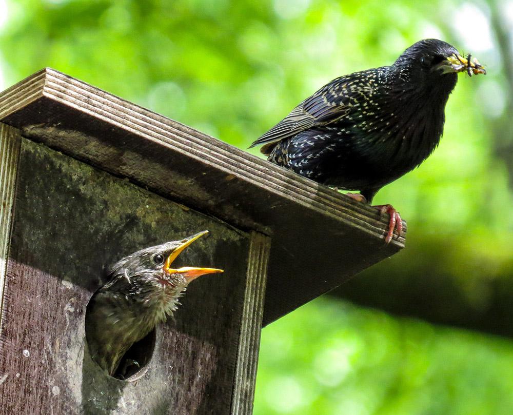 Nistkasten für Vögel