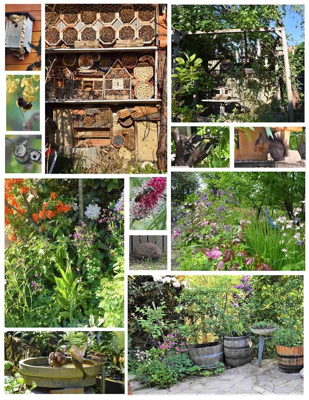 Nationalpark Garten Siegerfoto Platz 2