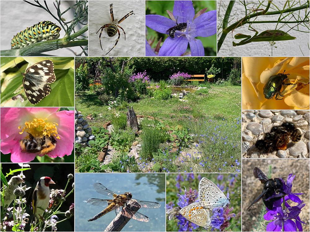 Nationalpark Garten Fotowettbewerb Gewinner Platz 3: Marianne