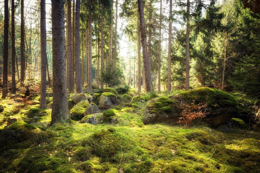 Unberührter Wald (c) Shutterstock / ohenze