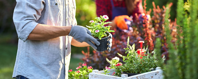 Zierpflanzen testen für Garten