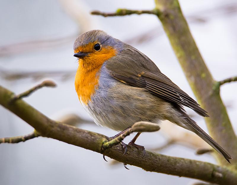 Vogelschutz: Wie sie den Piepmätzen ein Zuhause geben