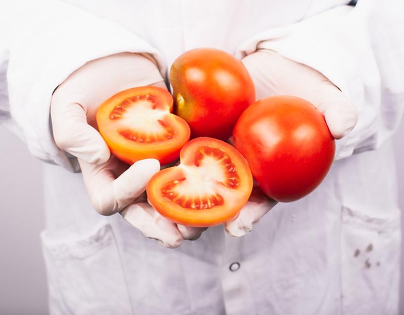 Neue Gentechnik - Laborant hält Tomaten in der Hand
