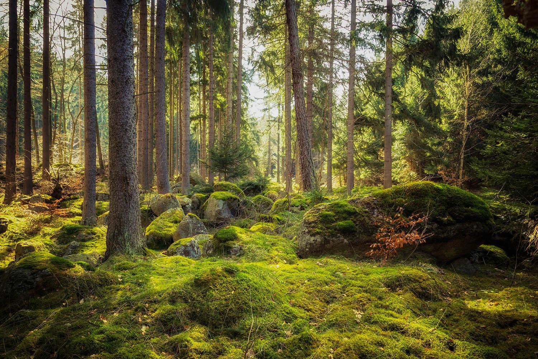 Unberührter Wald (c) ohenze / shutterstock.com