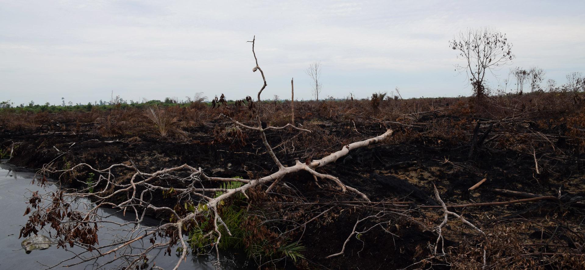 Verbranntes Land in Pekanbaru