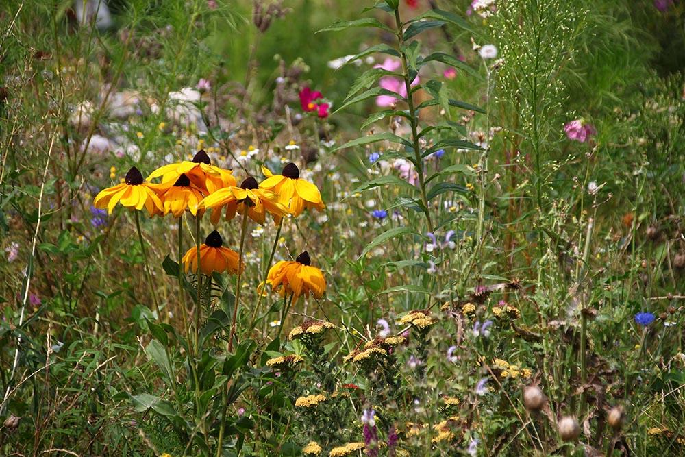 Blumenwiese im Garten von Frau Suppan