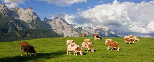 Alm in Österreich