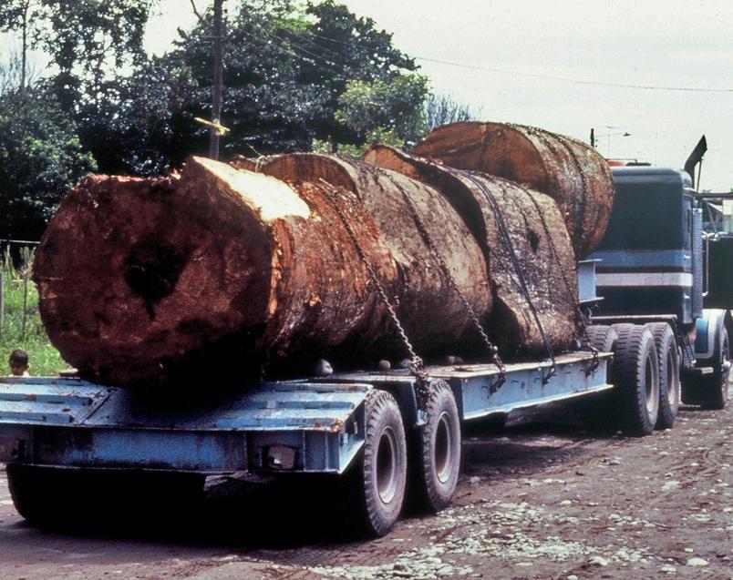 Tropenholztransport